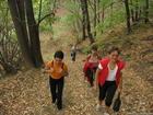 есен в гората на връх Аида