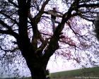 Голямо дърво